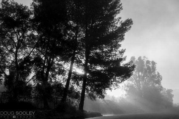 tree-fog